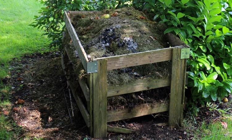 Compostagem caseira: como gerir os resíduos orgânicos e ajudar o ambiente