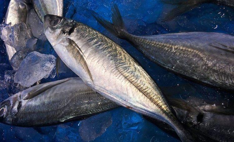 Meta 1 - Vai à peixaria? Escolha peixe sustentável