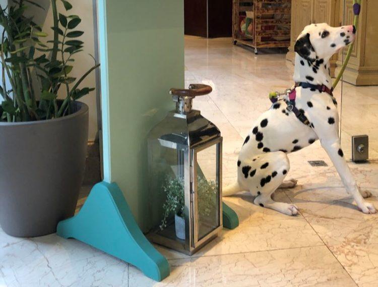 O seu cão já pode ficar no Lisbon Marriott Hotel