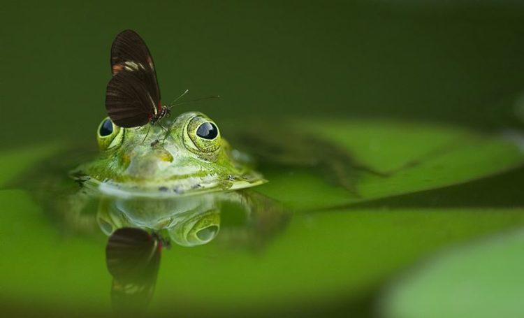 Novo plano de emergência pode travar colapso da biodiversidade aquática no mundo