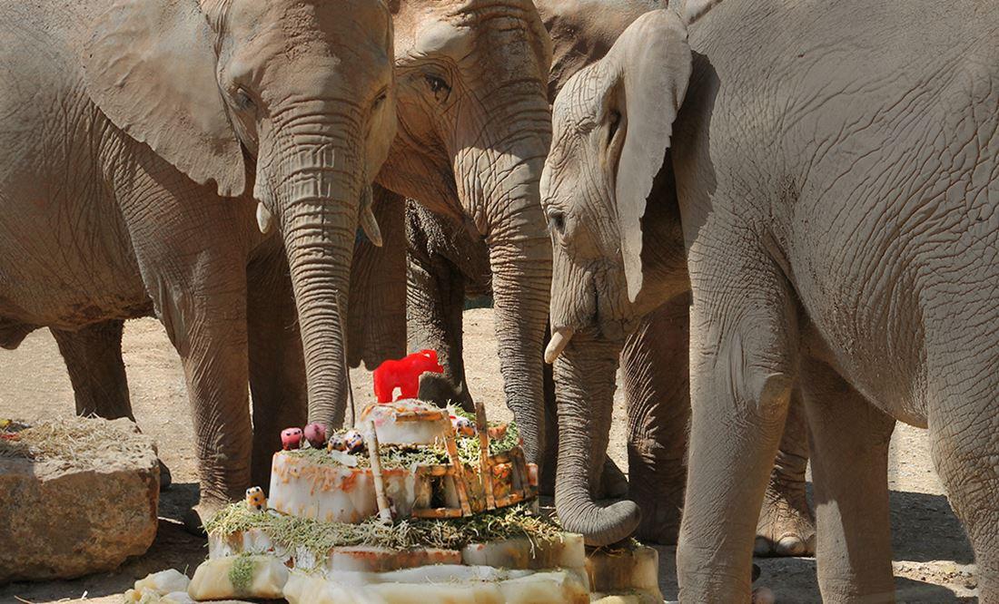 Jardim Zoológico: há 136 anos a criar memórias