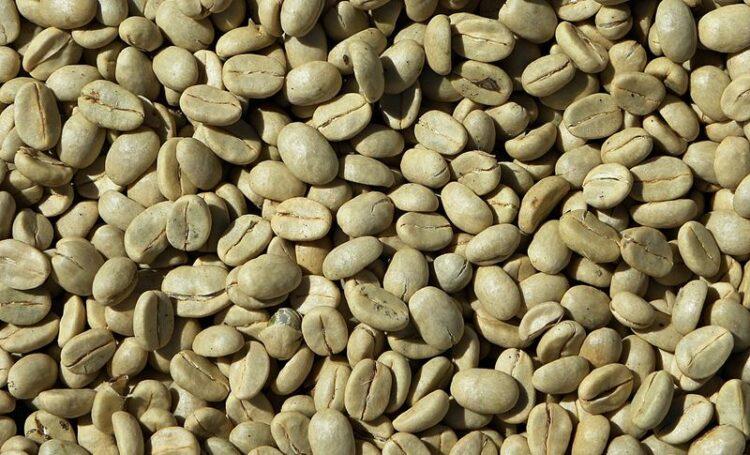 Bela no verão: Cuide da sua silhueta com café verde