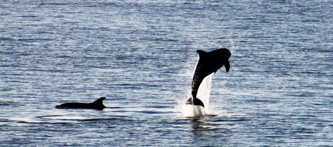 Golfinhos-roazes_Troia Natura