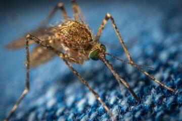 A propósito do Dia Mundial do Mosquito falamos com a dermatologista Helena Toda Brito sobre os perigos das suas picadas e as formas de proteção mais eficazes.