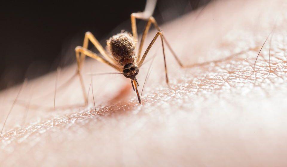 Use repelente de insetos que tenham pelo menos 20% a 30% de DEET, composto químico repelente.