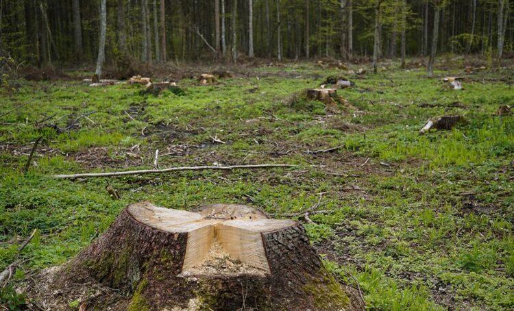 Um milhão de pessoas exigem lei europeia para travar desflorestação