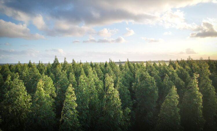 Recorde: Mais de um milhão de pessoas exigem lei que trave desflorestação na Europa