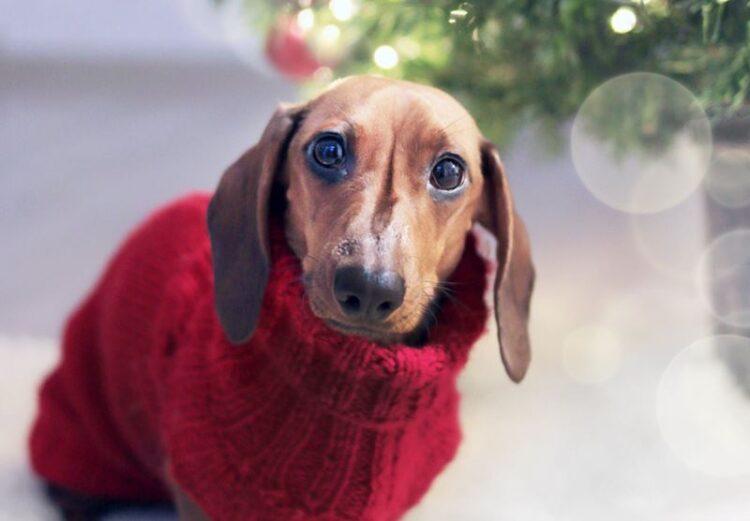 Campanha alerta para que não se ofereça animais como presentes