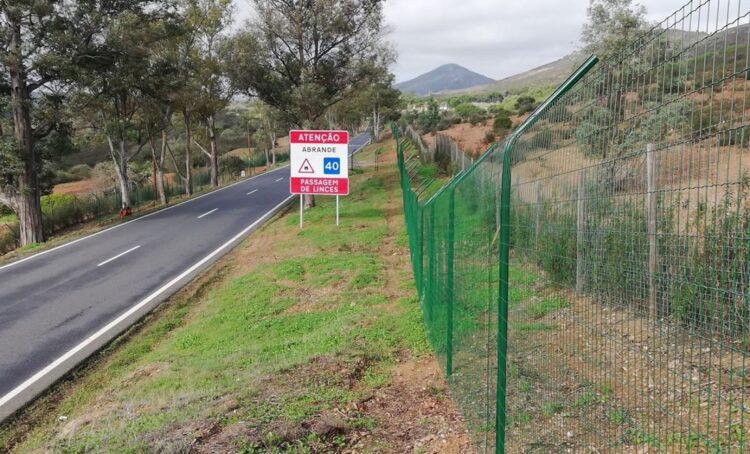 Colocada vedação em estrada na zona de Mértola para proteção do lince ibérico