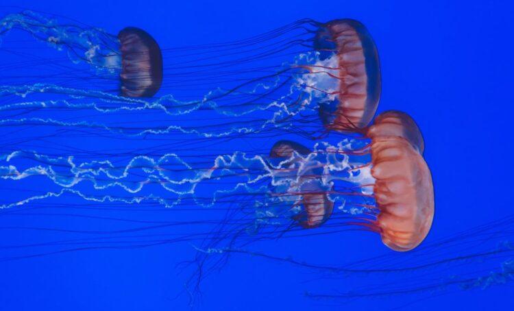 Ambientalistas alertam para perigos da mineração em mar profundo