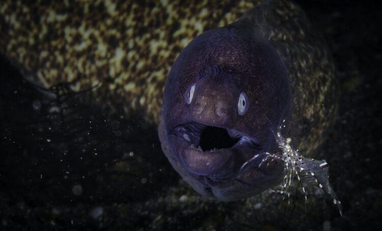 Um terço das espécies de peixes de água doce do mundo em risco de extinção