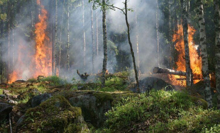 Mais da metade das florestas da Europa estão vulneráveis às alterações climáticas