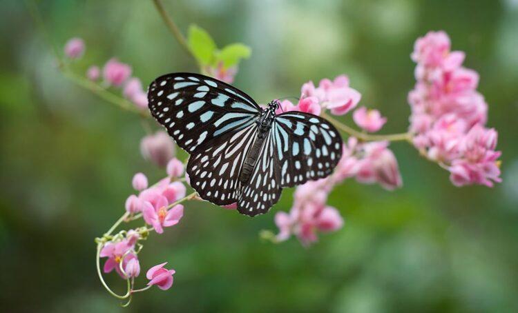 Com o aumento da temperatura as borboletas aparecem mais cedo