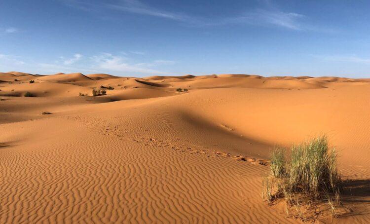 À descoberta dos desertos: ONU lança viagem virtual para conhecer três ecossistemas desérticos únicos