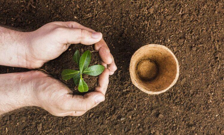 Projeto quer plantar 50 mil árvores para reduzir ondas de calor no Alentejo