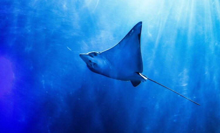 Portugal no topo dos países europeus que mais capturam tubarão e raia