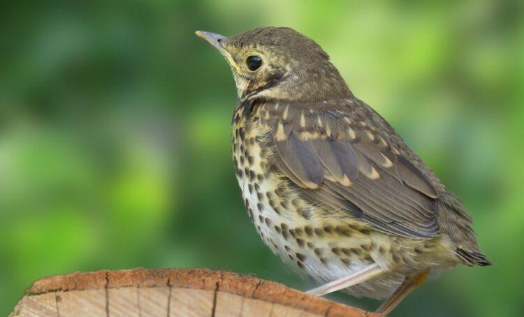 Armadilhas para aves vão ser proibidas
