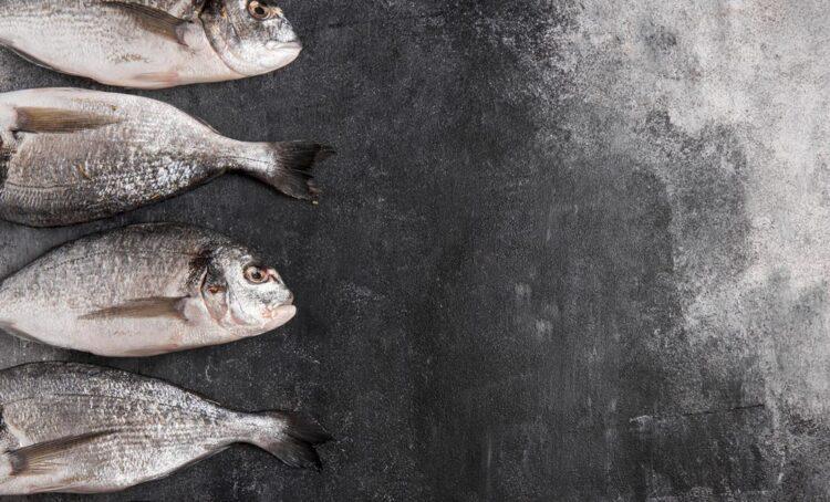 douradas peixe