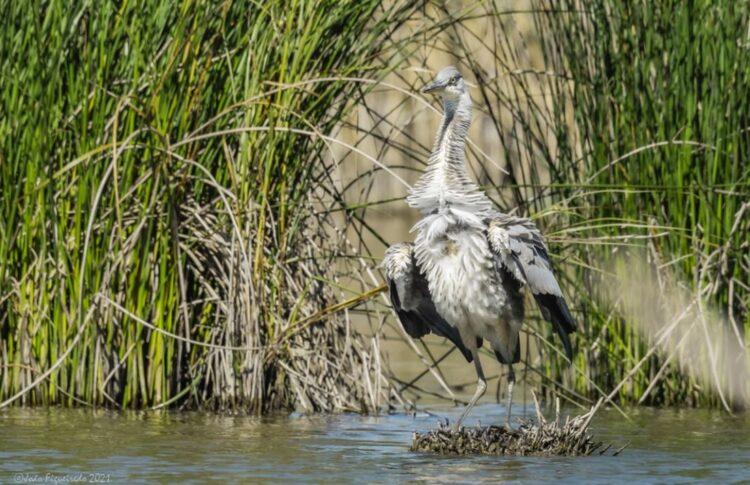 Montemor-o-Velho desenvolve projeto de Birdwatching