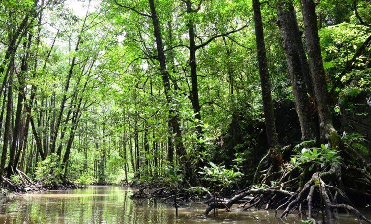 mangal floresta tropicos