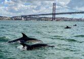 Golfinhos no Tejo