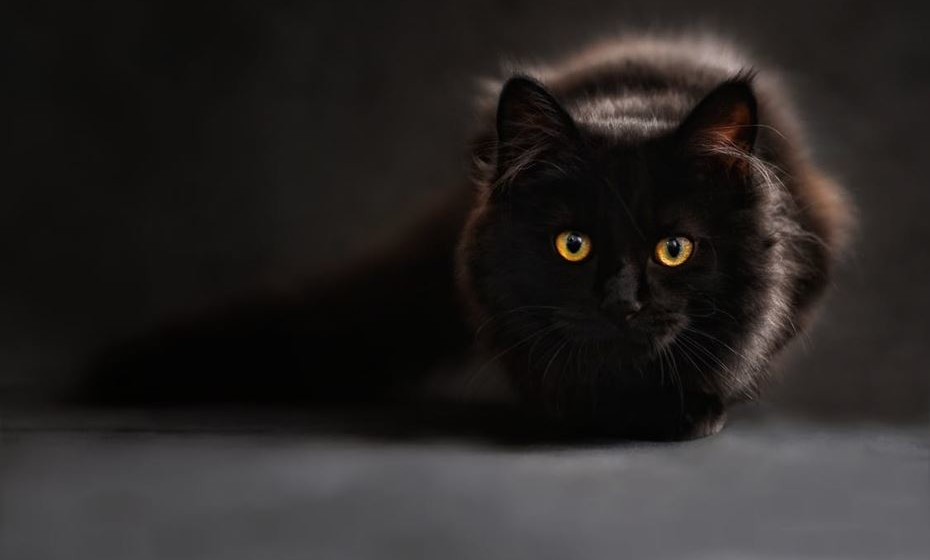 Existem também preconceitos e crendices relacionados com a cor preta, como, por exemplo, que o gato preto é um sinal de azar.