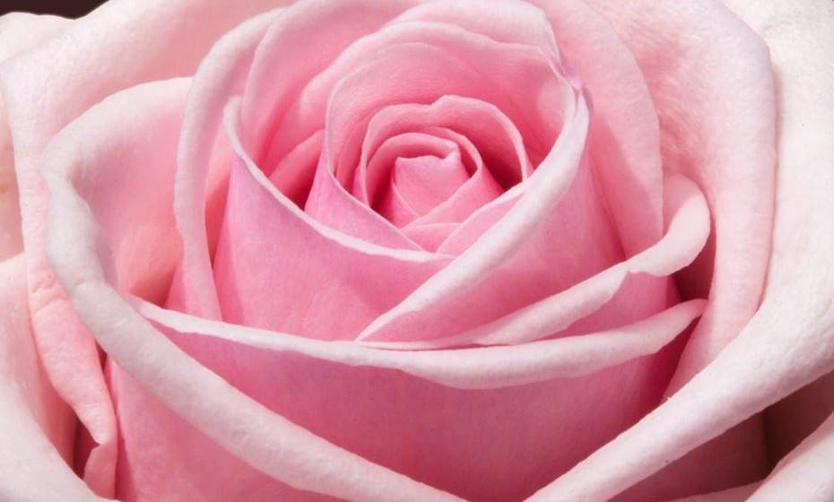 Cor-de-rosa: É a cor do romantismo, beleza, suavidade, pureza, fragilidade e delicadeza, culturalmente associada ao universo feminino. Os tons de rosa claro são ligados ao amor e ao romantismo e os tons de rosa escuro estão associados à sensualidade e sedução.
