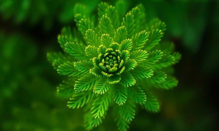 Verde: A cor verde significa esperança, liberdade, saúde e vitalidade e está associada ao crescimento e renovação. O verde simboliza a natureza, o dinheiro e a juventude. Pode ser usado como reconfortante e estimulante em momentos de depressão e tristeza.