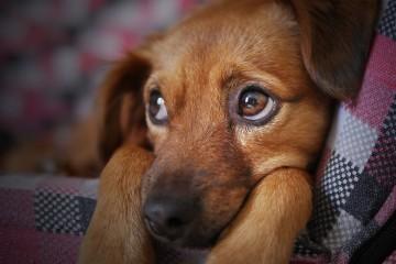 É por esta altura que, infelizmente, muitos cães são abandonados. Ter um animal é um ato de responsabilidade e o seu abandono é inaceitável. Se anda a pensar em adotar um cão, conheça as vantagens de ter em casa um amigo de quatro patas.
