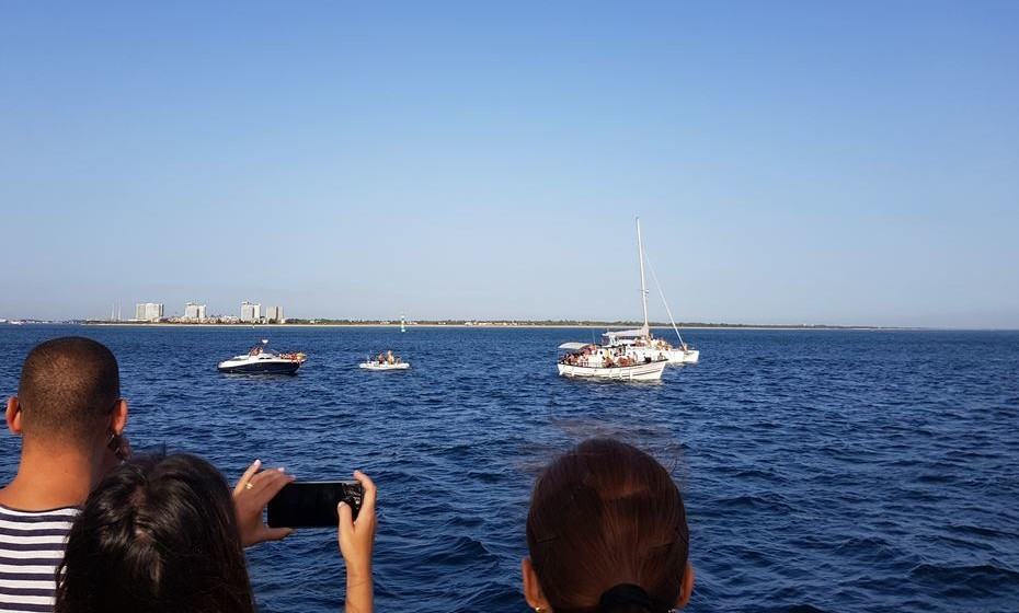 Momento de observação de golfinhos no final do estuário do Sado.