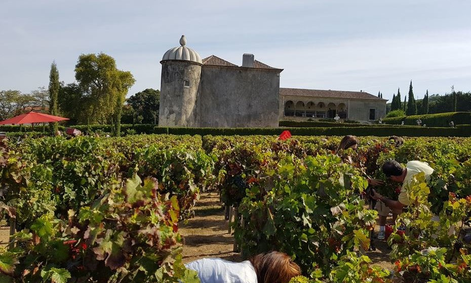 Em que período do ano se faz as vindimas em Portugal? Inicia-se com os vinhos brancos no sul, em meados de agosto e finaliza nos planaltos da Beira, por vezes, no final de novembro. Em meados de setembro, é habitualmente a época onde, por todo o país, se está a vindimar.