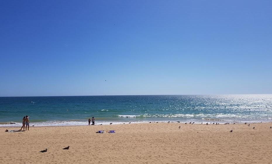 Os golfinhos desta vez visitaram a praia bem de perto.