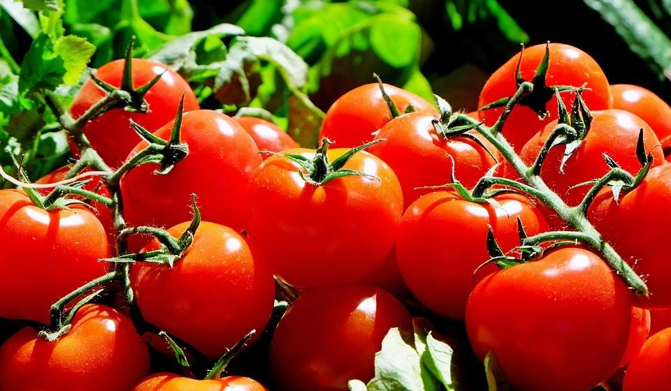 Tomates – ricos em licopeno, ajudam a proteger dos danos causados pelos raios solares. Cozinhados com gorduras saudáveis, como o azeite, aumentam ainda mais a absorção de licopeno pelo corpo. Curiosamente, o licopeno a partir de produtos de tomate transformados parece ser mais bem absorvido que o do tomate cru.