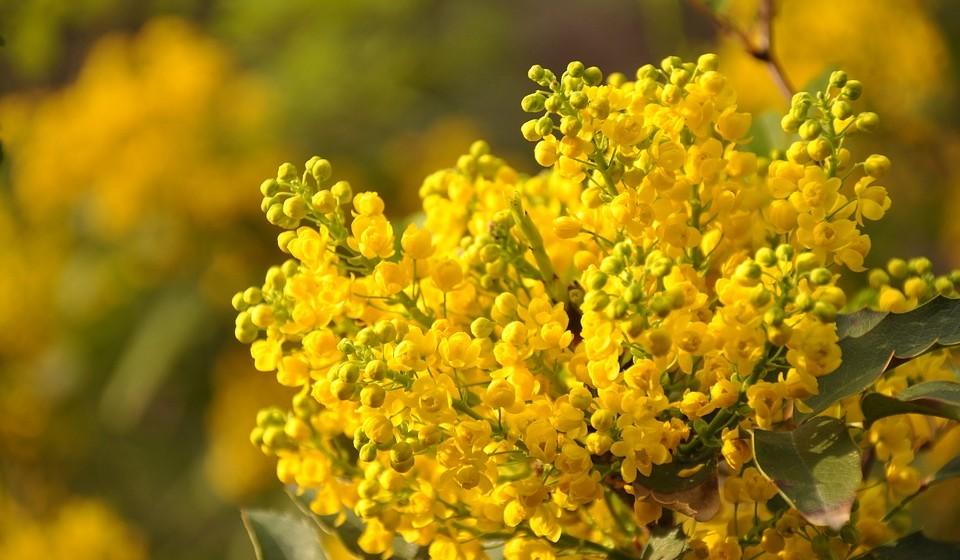 2009: O amarelo mimosa deu cor ao ano de 2009, por ser um tempo de incertezas económicas e mudanças políticas. O otimismo era primordial e nenhuma outra cor expressa esperança e tranquilidade mais do que amarela, revela a Pantone.