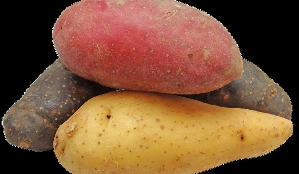 Batatas: pode comer. Brancas ou doces, são muito nutritivas para os cães. Mas alimente o seu cão só com batata cozida. E em poucas quantidades.