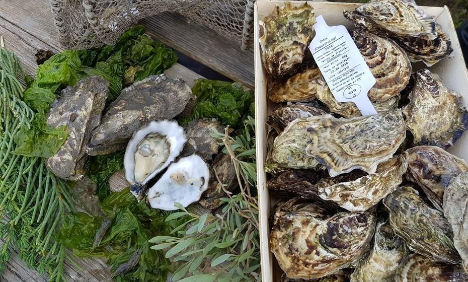 As ostras desta produção seguem essencialmente para restaurantes de topo de Lisboa e para exportação.