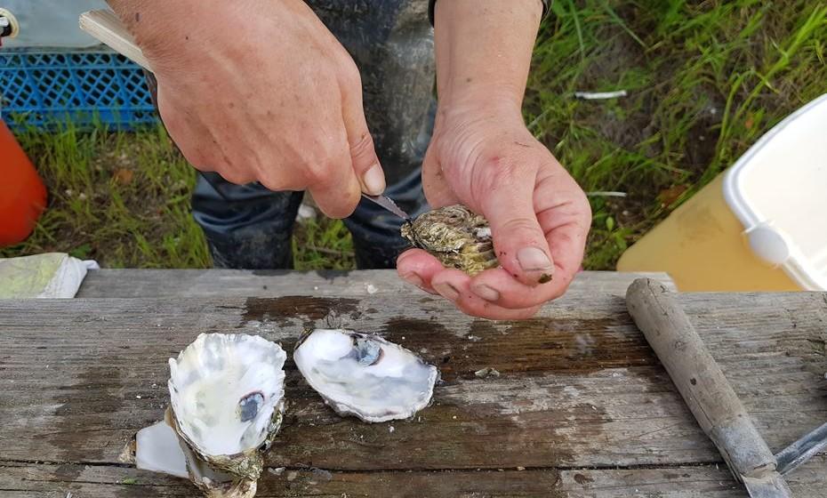 Como se abre uma ostra? Veja o vídeo no final do artigo.