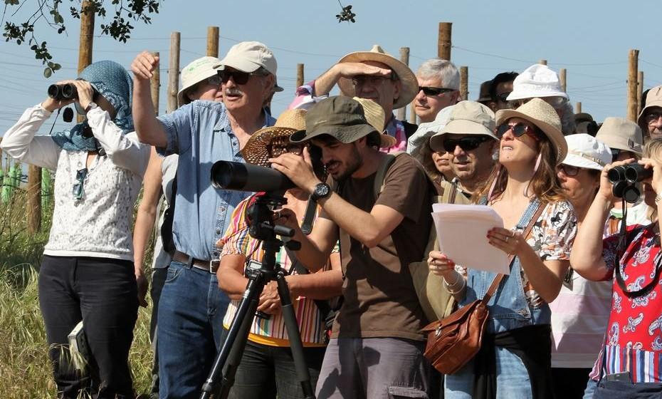 Sessão de observação de aves na Herdade dos Grous. Foto: terrassemsombra2018 (c) Arlindo Homem.