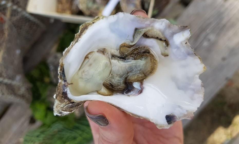 A riqueza da ostra está na sua composição nutricional.