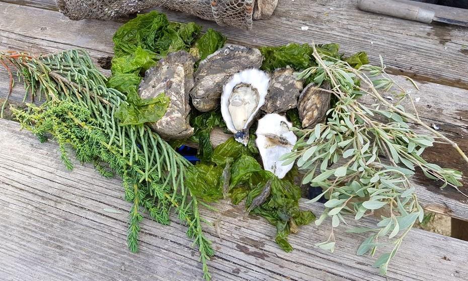 Existem muitas plantas comestíveis junto à produção, como beldroegas do mar, salicórnia, etc..