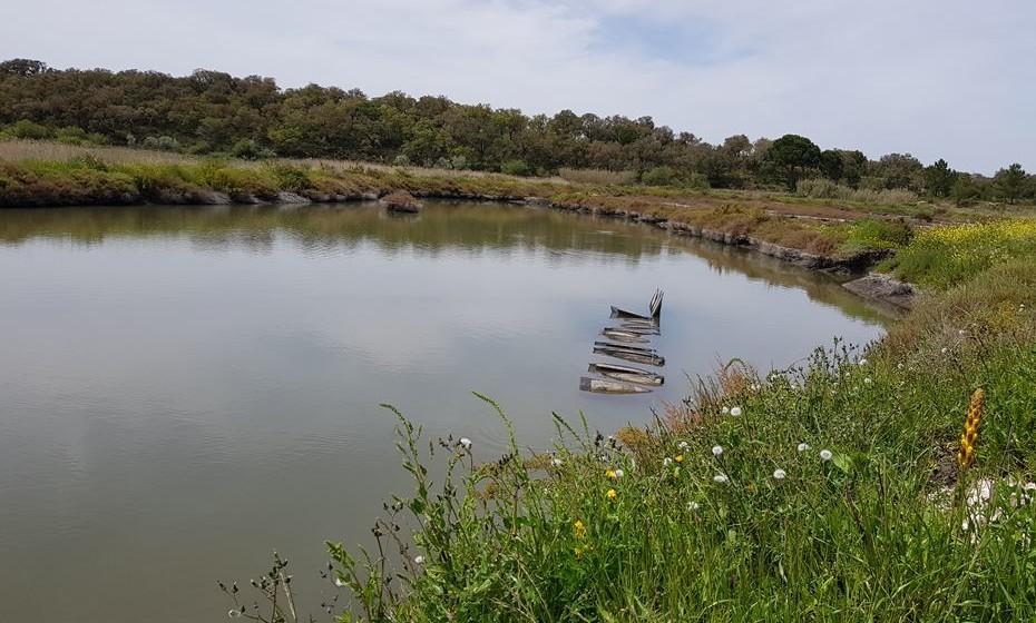 As ostras estão expostas ao vaivém da água.