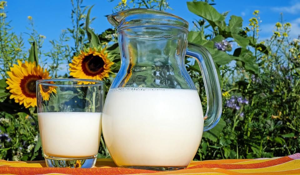 Cálcio, fósforo, vitamina B2 e proteína são os principais nutrientes do leite que proporcionam diversos benefícios para a sua saúde.