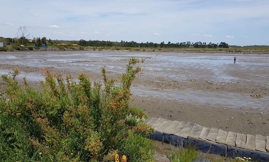 Neste tanque com dois hectares são produzidas 500 mil ostras nas suas diversas fases de evolução.