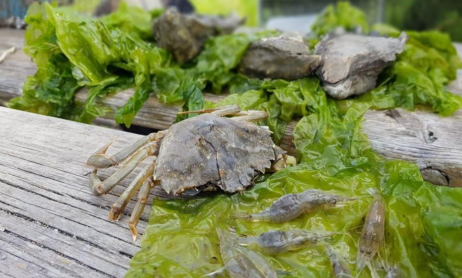 Caranguejos e camarões fazem parte do habitat natural do estuário.