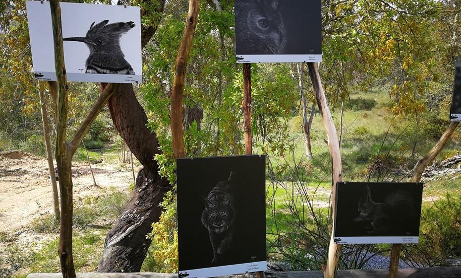 Alguns quadros do novo projeto que alia natureza e arte