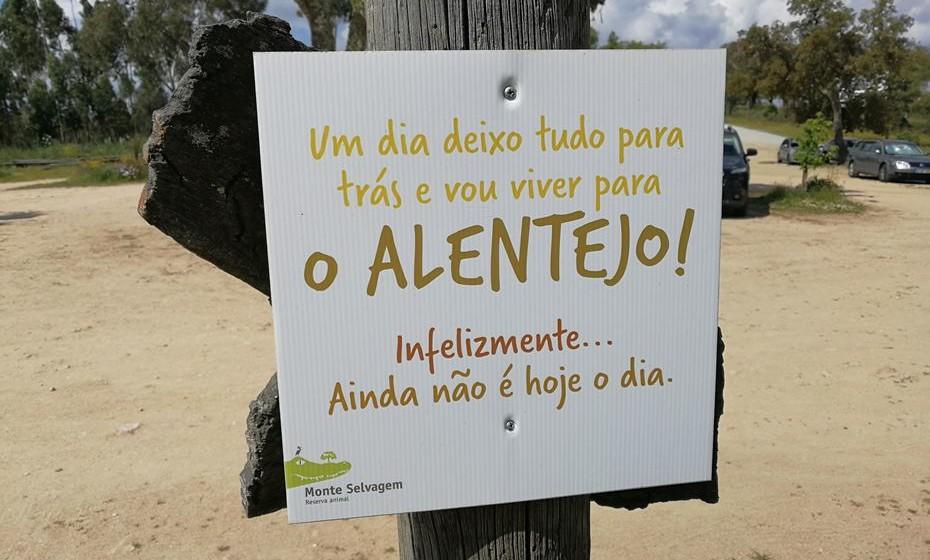 Mensagem para os que adoram o Alentejo. Fotos: Erica Quaresma