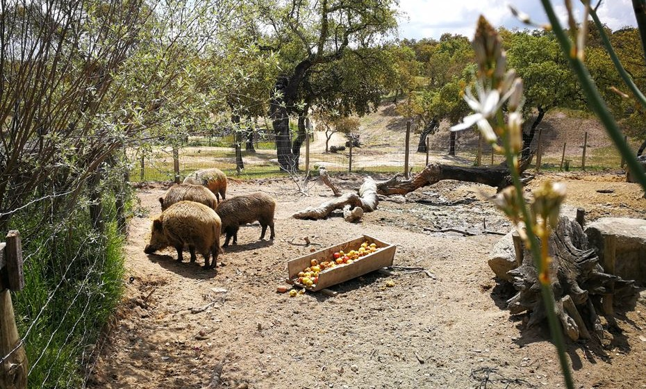 O Monte Selvagem alberga animais há 14 anos