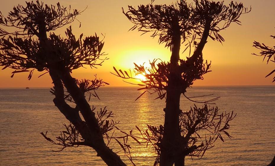 Crie silhuetas que atraiam o olhar. Se quiser criar uma silhueta, o sol tem de estar por detrás do objeto. O nascer e o pôr-do-sol criam sombras ainda maiores, que dão às fotografias um maior dramatismo.
