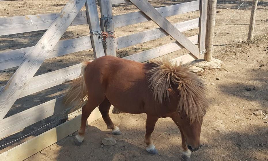 Pequeno ponei.