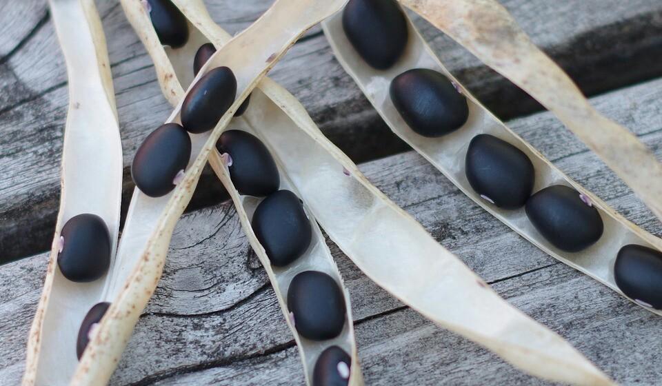 Feijão preto - Este tipo de feijão é mais conhecido na América Central ou do Sul, mas, atenção, não oferece um tipo de potássio tão forte como o feijão branco. Mas mesmo assim, o feijão preto fornece cerca de 13% da quantidade de potássio que deve ser ingerida diariamente.